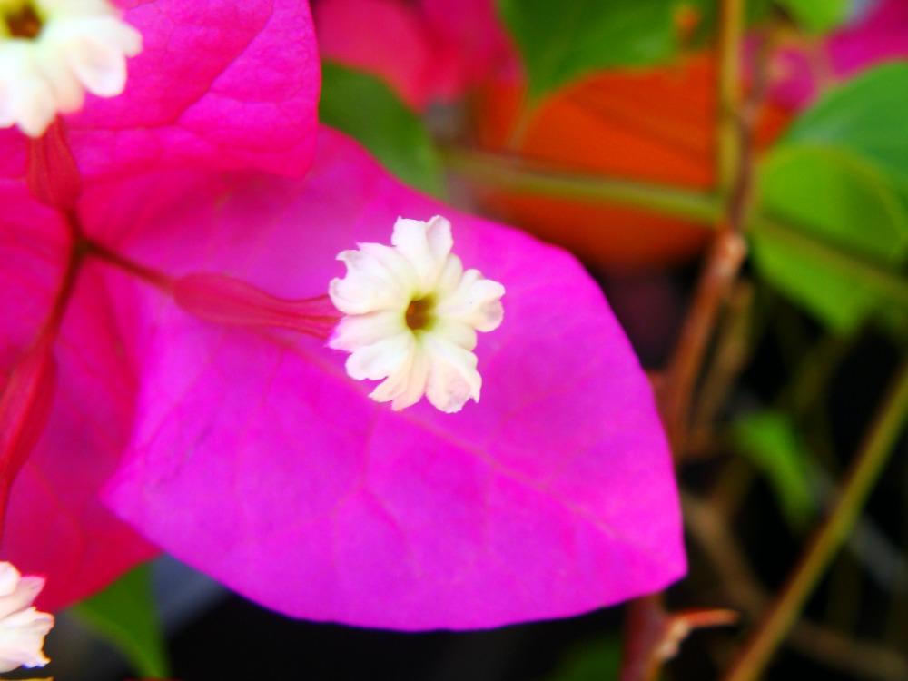 33- Flowers