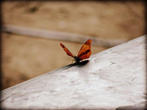 *71* Butterfly
