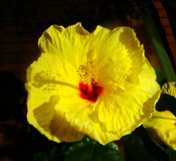 *85* Flor Amarilla