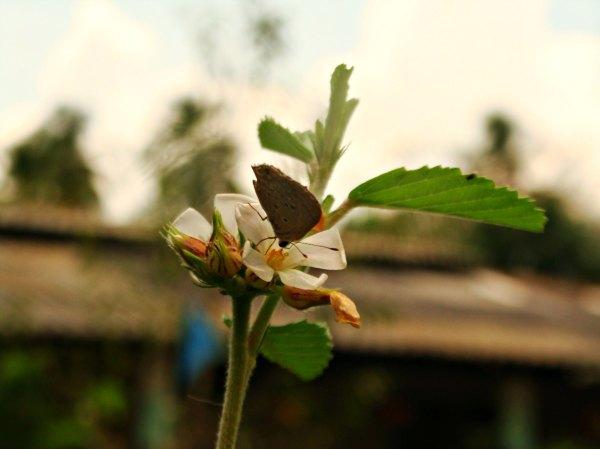 *89* Mariposa