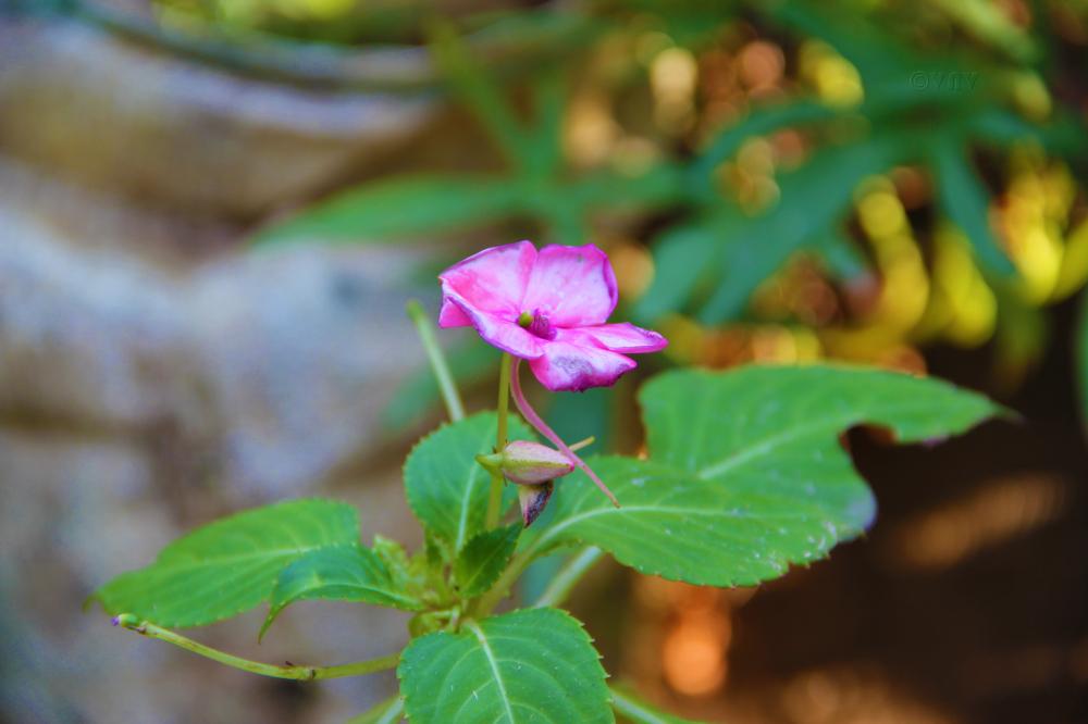 Flower at Kanoor