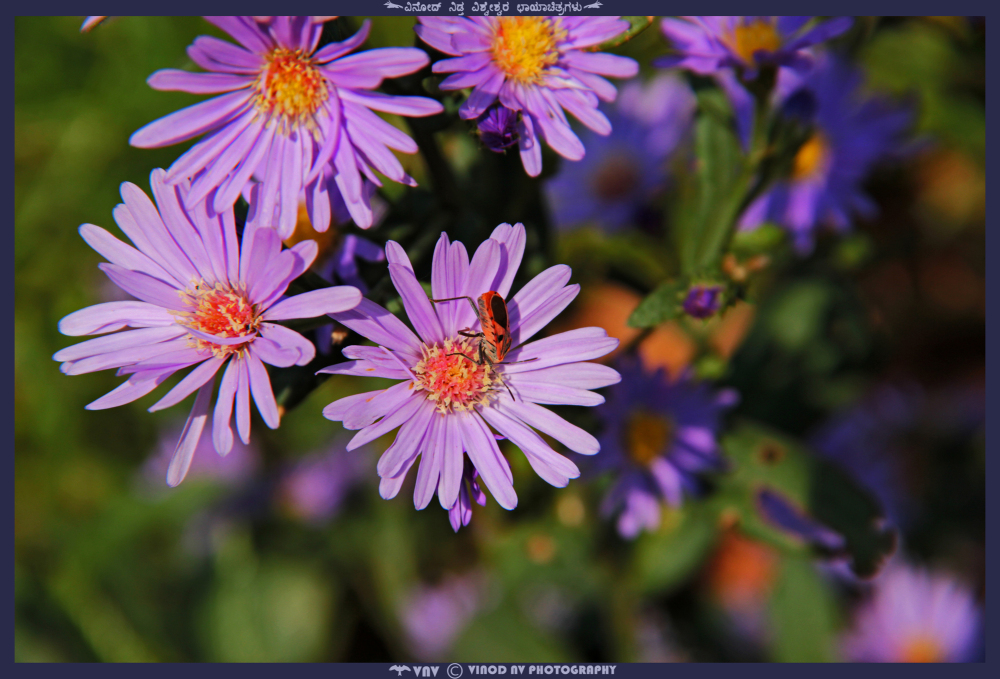 Purple Flower and Bug