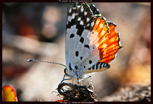 Colors of Nature - Butterfly