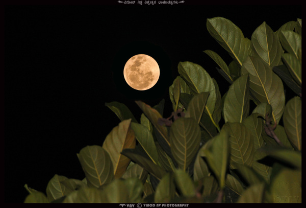 The Moon and Leaves - Playing Hide n Seek