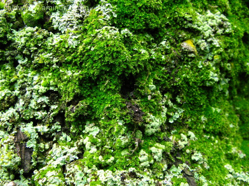 Mini forest ...