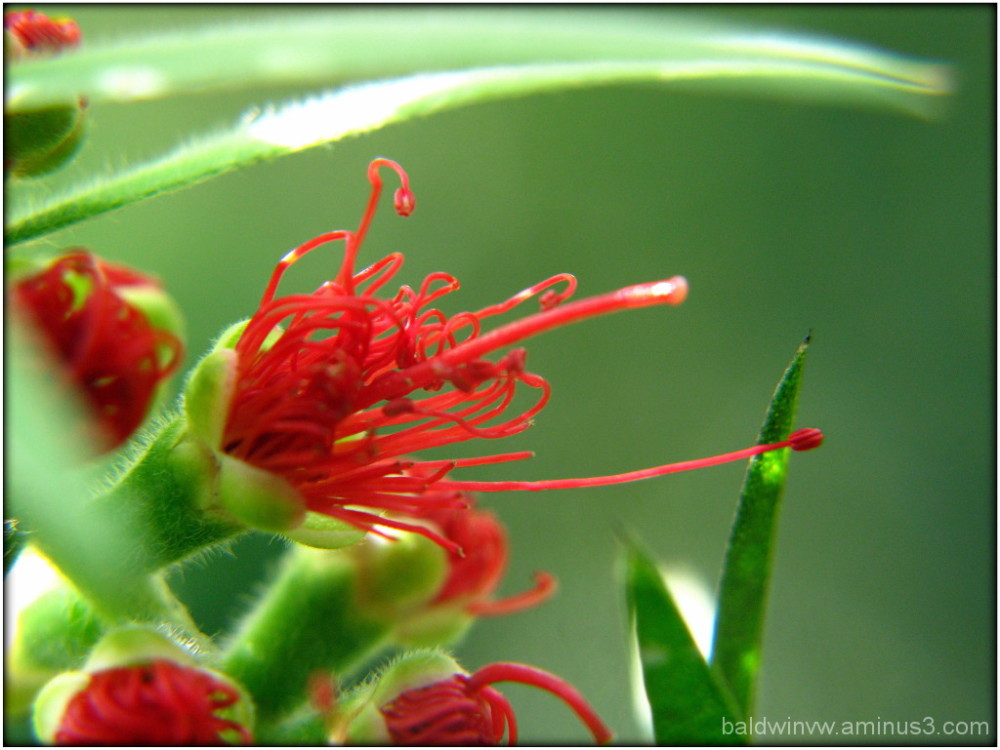 Red burst ...