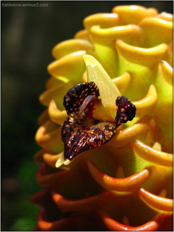 Beehive II ...