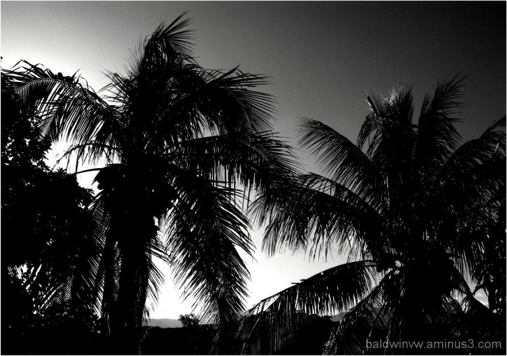 Evening light ...