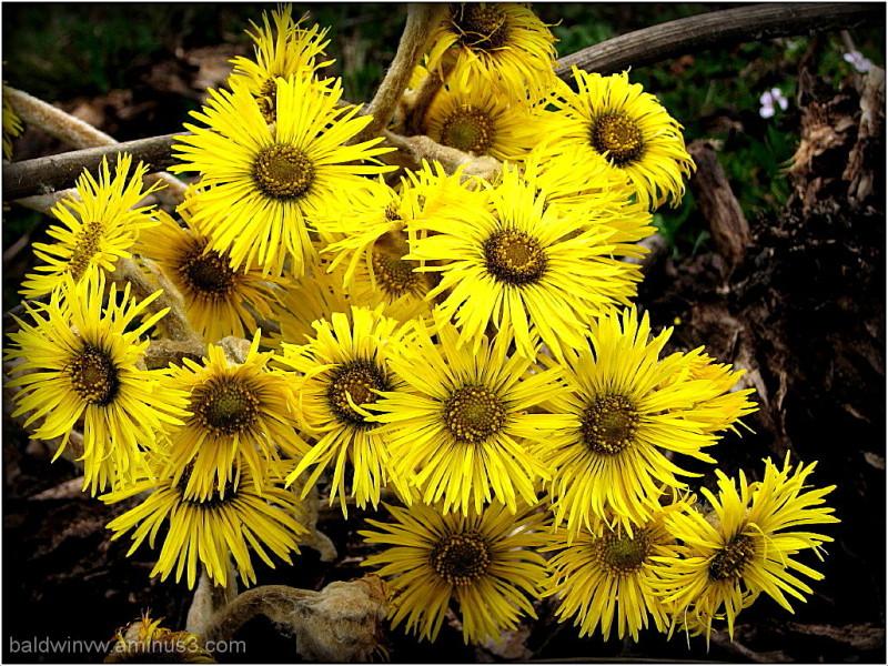 A bouquet of sunshine ...