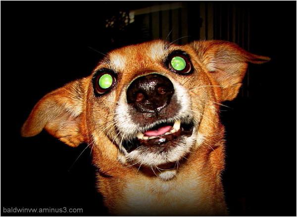 Crazy eyes ...