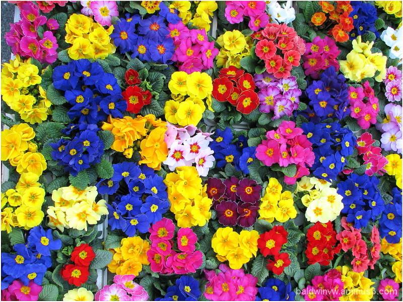 Floral kaleidoscope ...