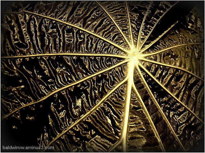Golden rays ...