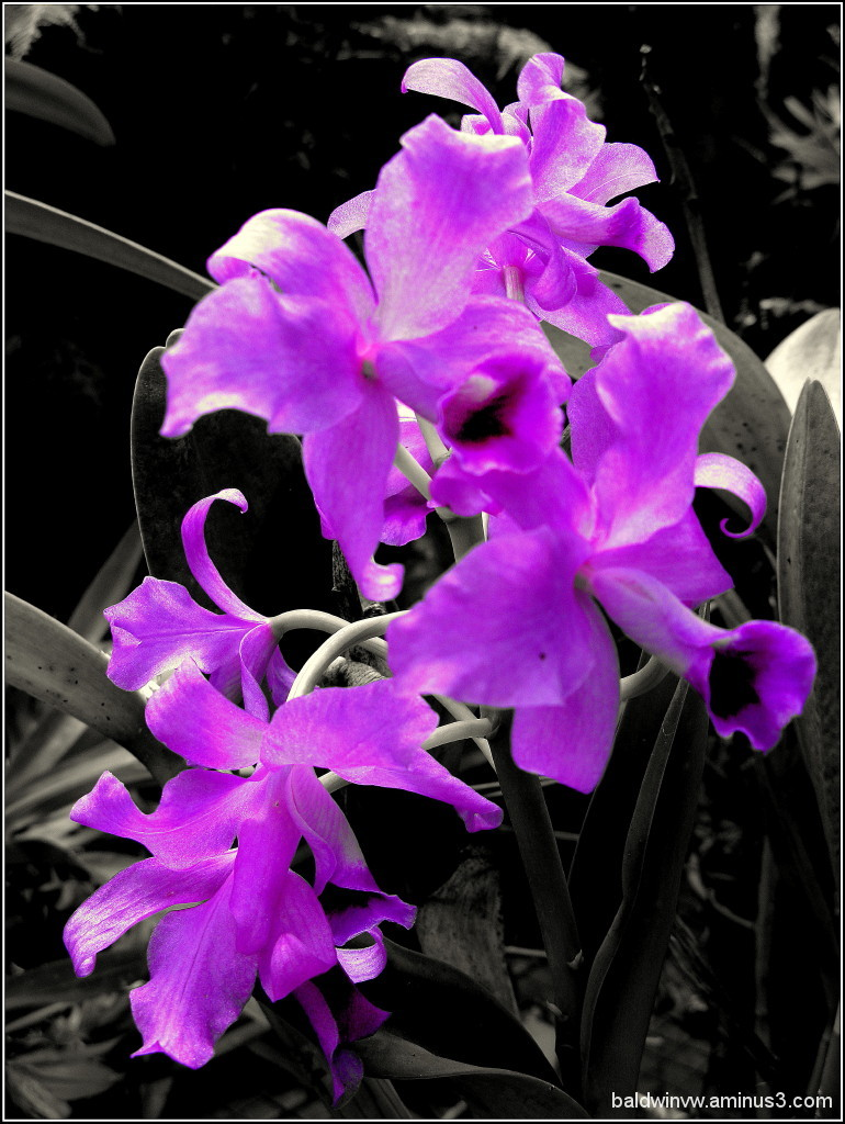 Just an orchid ...