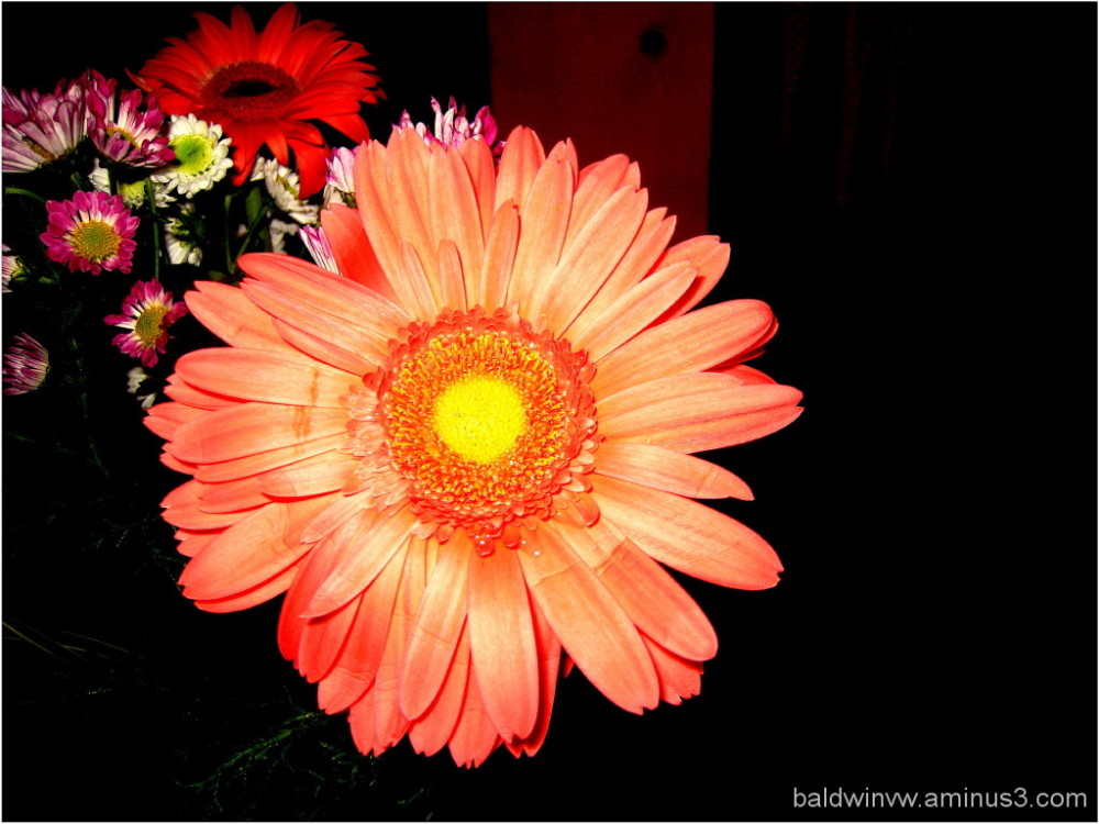 Just a flower ...