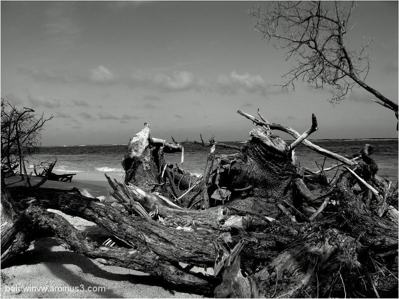 Driftwood ...