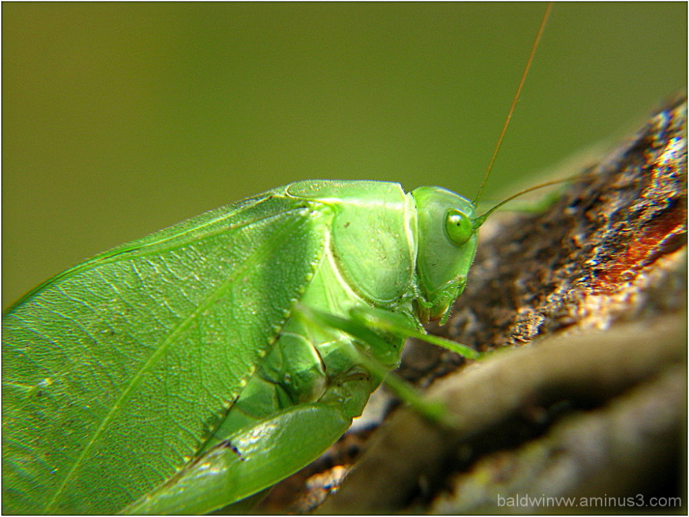 Living leaf ...