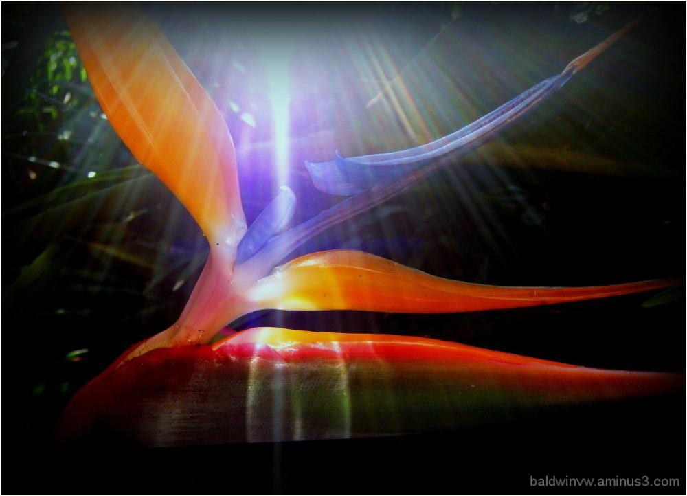 Celestial light ...