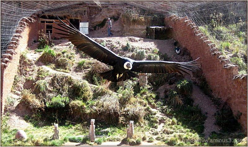 """""""El Condor pasa"""" ..."""