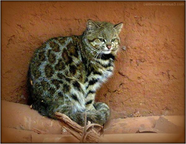 Feline beauty ...