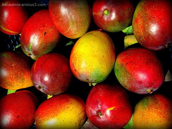 Ripe mangoes ...