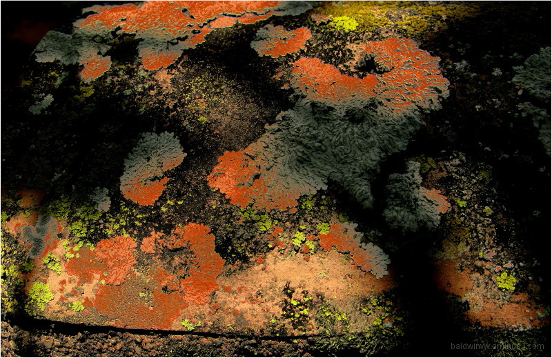 Abstract nature ...