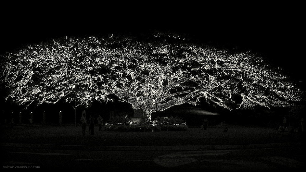 Tree of lights ...