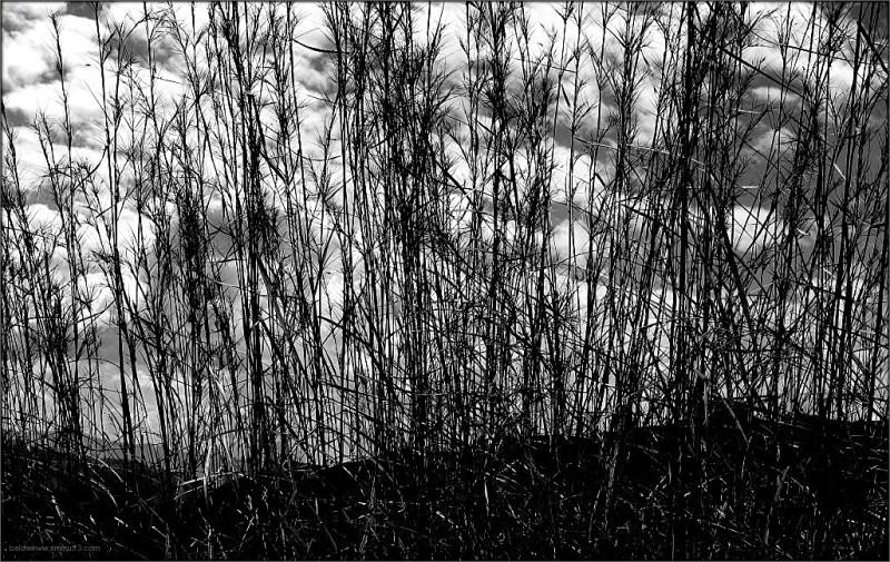 Veiled landscape ...