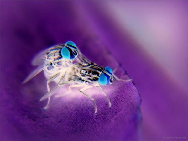 Love is Blue ...