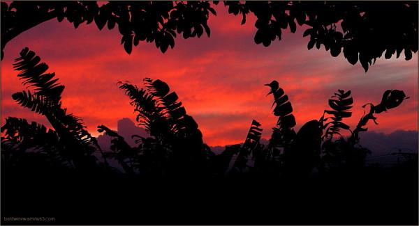Phantoms of dusk ...