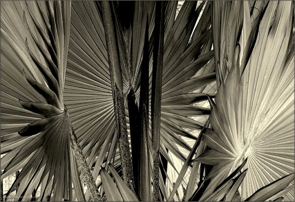 Radially pleated ...