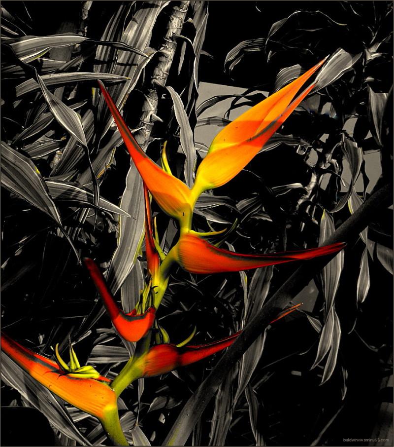 Flames ...
