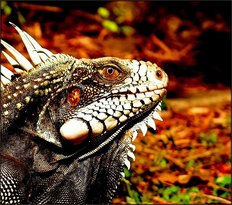 Prehistoric beauty  ...