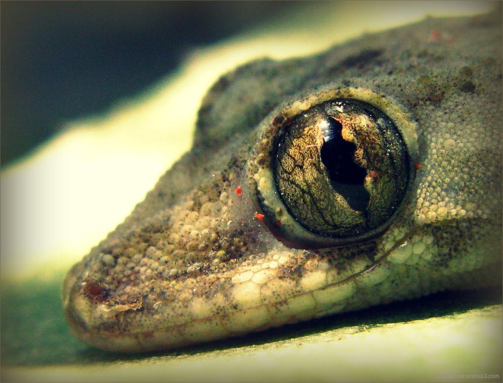 Dragon eye ...