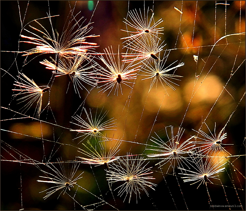 Fireworks of Nature ...
