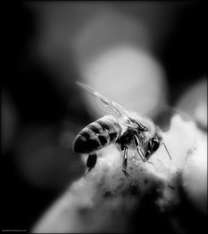 Bee ... my light  !!!