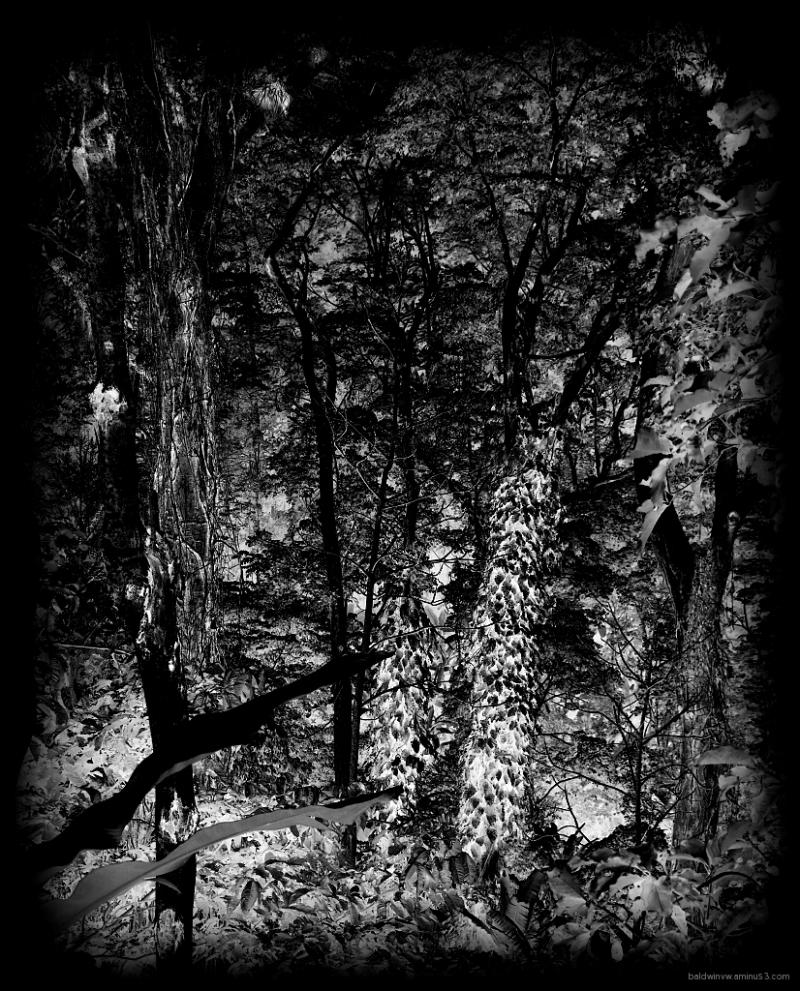 Black forest ...