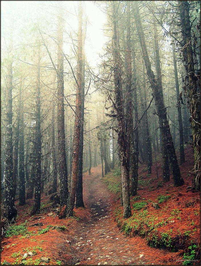 Narrow and misty path ...