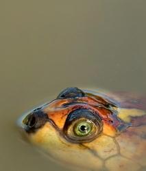 Green - eyed ...