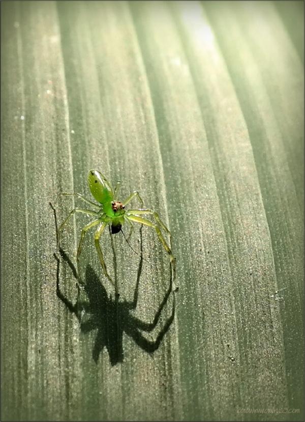 Fear me !!! ...