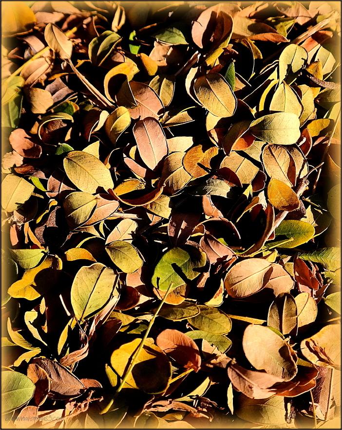 Summer leaves ...