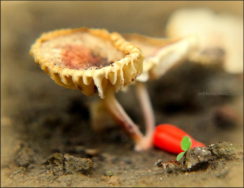 Miniature world ...