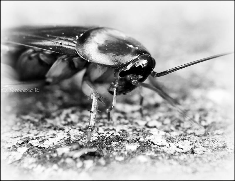 Roach ...