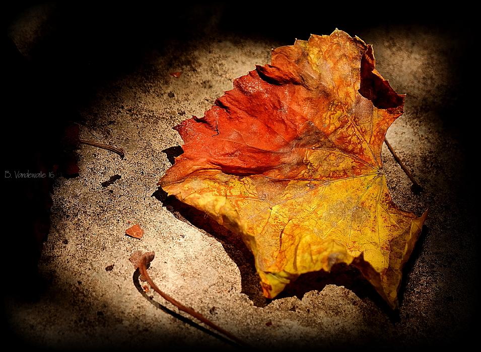 Fallen beauty ...