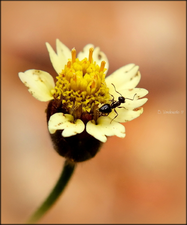 Tiny world ...