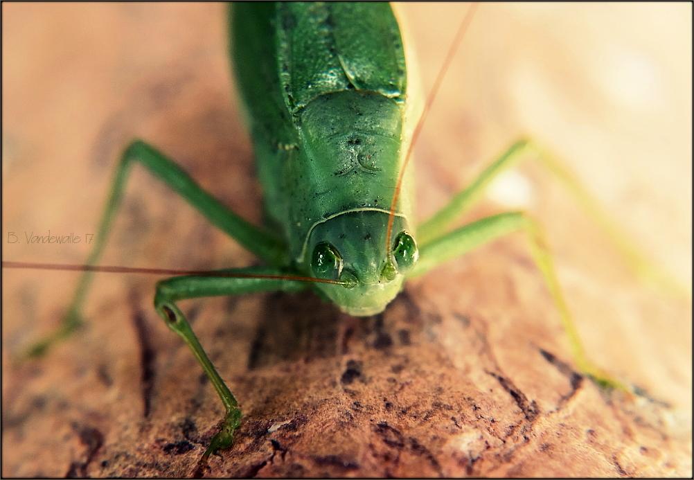 Emerald eyes I ...