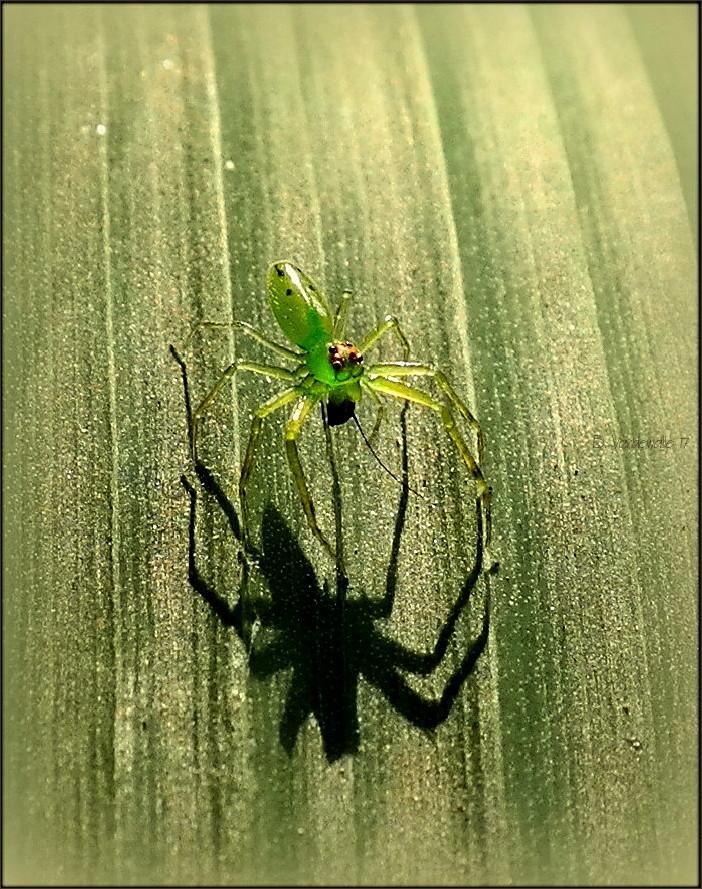 Fearsome shadows II ...