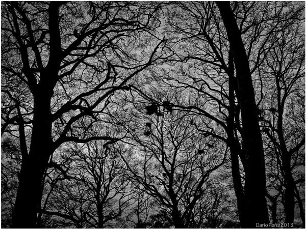 Trees Ardscull