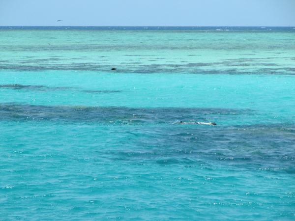 Lone snorkeler