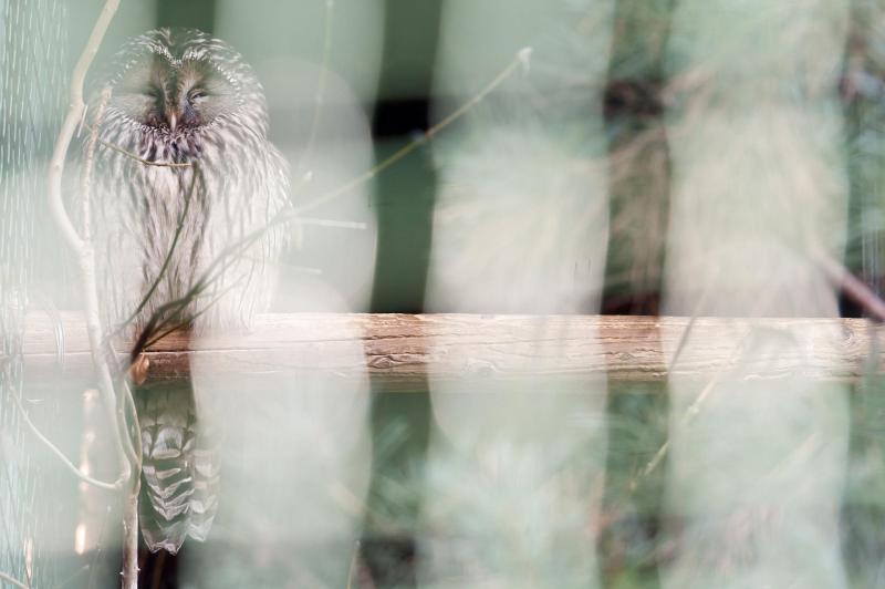 Nachtvogel im Gehege von Cornino, Friaul