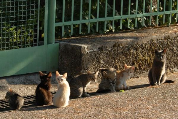 Katzen, Cats